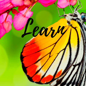 learn Reiki from Second Nature Healing