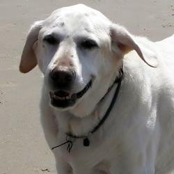 zeolite for dog cancer