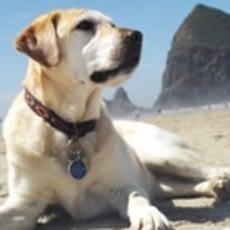 hemangiosarcoma in dogs success