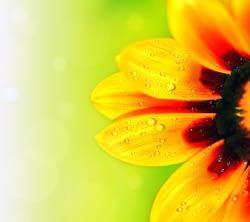 heal holistic spiritual energy energy